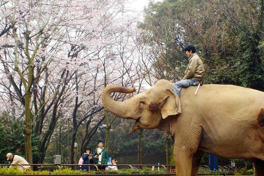 金沢自然公園・金沢動物園