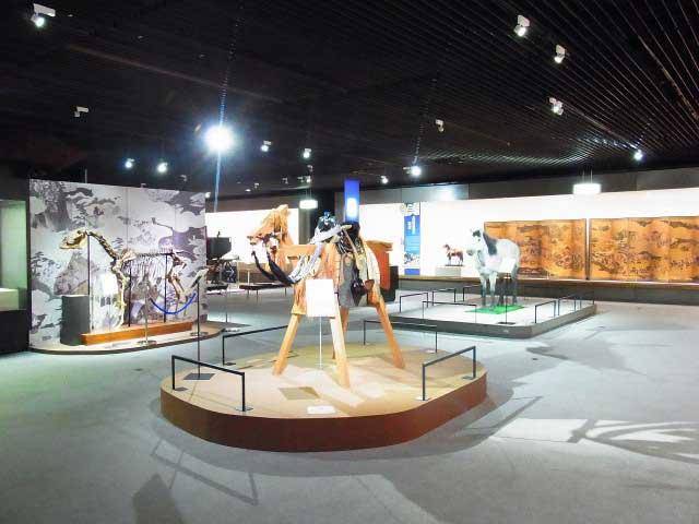 根岸競馬記念公苑 馬の博物館